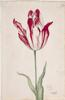 unknown Dutch artist - Great Tulip Book: Fabrij